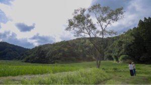 自然広がる風景